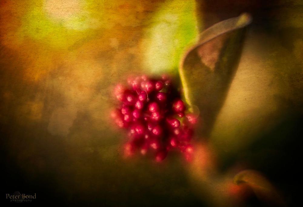 Colour In The Garden. Velvet 56