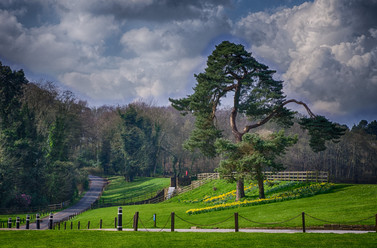Newstead Abbey Gardens
