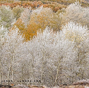 Morning Frost, Steens Mountain, no.2