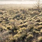 Fog, Sunlight and Bunch Grasses