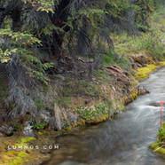 Taiga Creek