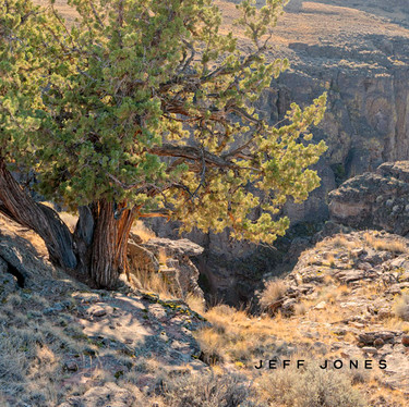 Juniper, Owyhee Canyonlands_no1