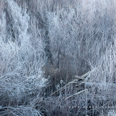 Frosted Riverbank Plants and Driftwood