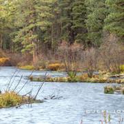 Fall Morning Along Metolius River