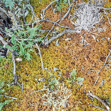 Tundra Close-Up