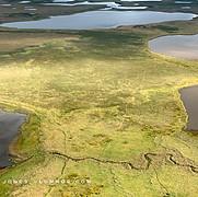 Sunlit Marshland