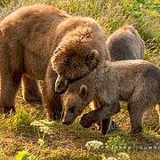 Sow and Cub Affection