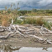 Driftwood Along Lakeshore, no.1