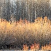 Deschutes River, Early Spring Willows