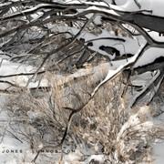 Fresh Snow Darkens Wood