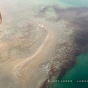 Brown Bear Chasing Sockeye Salmon