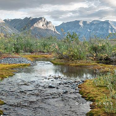 Early Morning Creek