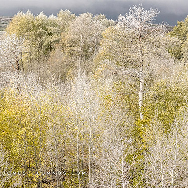 Morning Frost, Steens Mountain