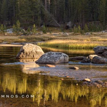 Reflections on Evolution Creek