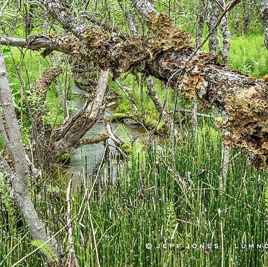 Forest Stream Vegetation