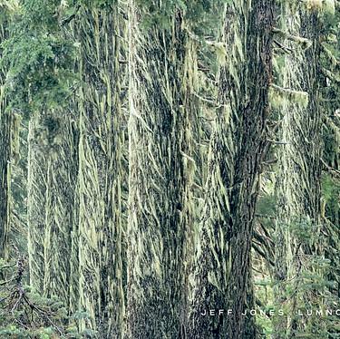 Lichen Bearded Pines