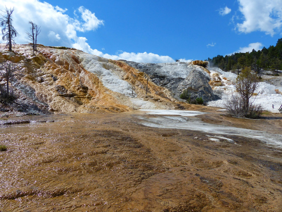 Yellowstone National Parc Mammoth Hot Spring Palette Spring