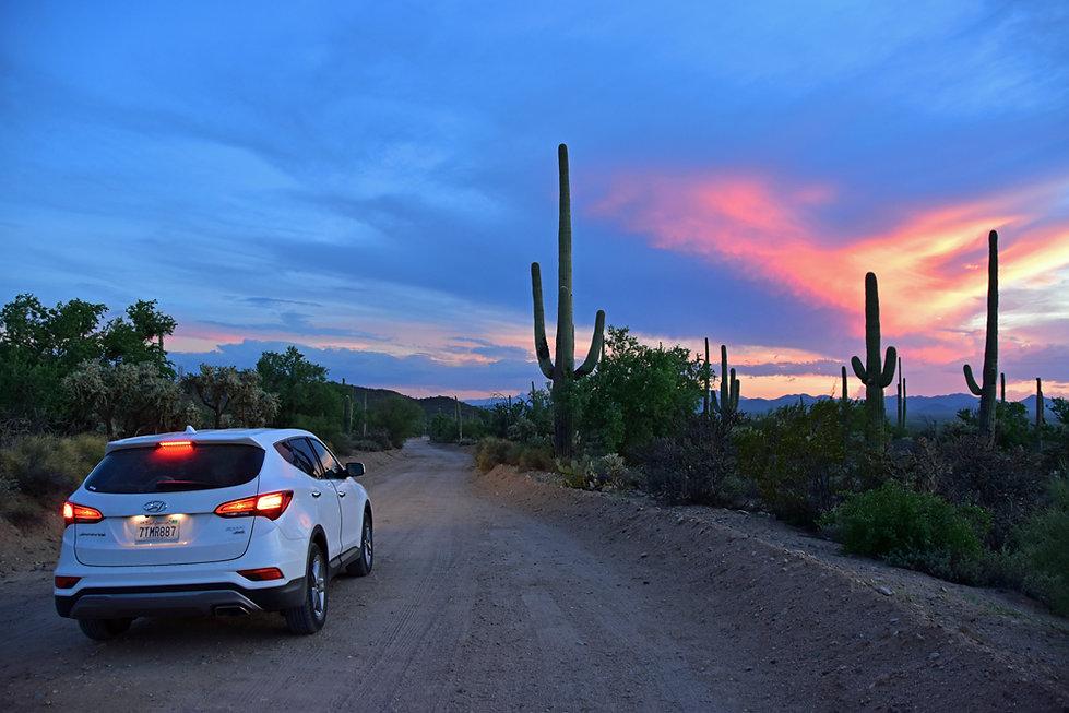 Arizona - Saguaro National Park - Cactus - Sunset