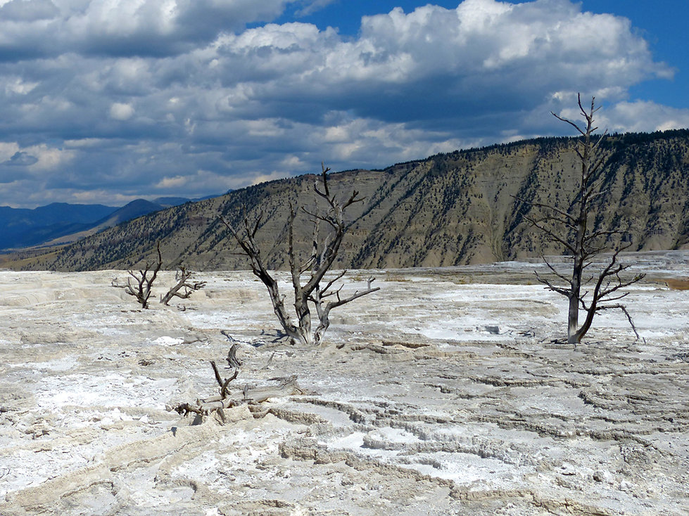 Yellowstone National Parc Mammoth Hot Spring arbres morts