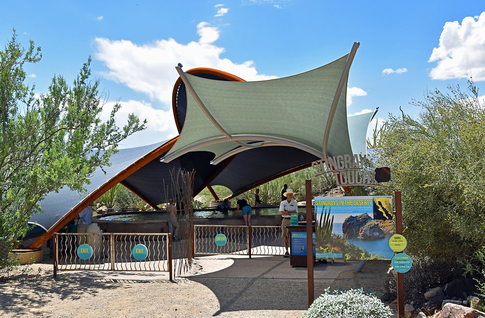 Arizona Sonora Desert Museum - stingray