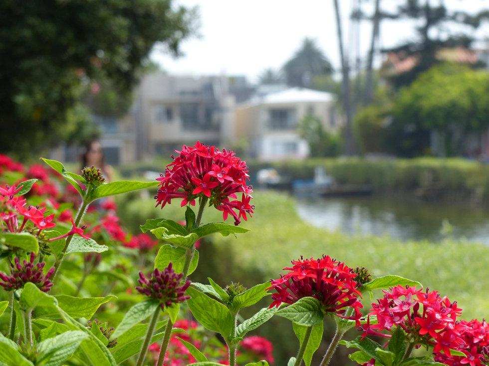 Los Angeles Venice canals fleurs flowers