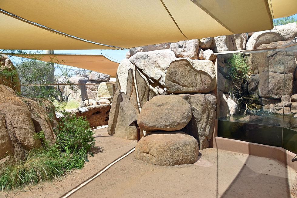 Arizona Sonora Desert Museum - life on rocks