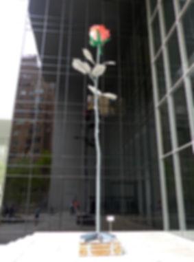 New-York - MOMA - rose