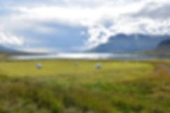 Berufjördur paysage islande iceland fjord est