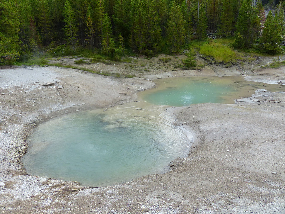 Yellowstone National Parc Norris Geyser Basin root pool