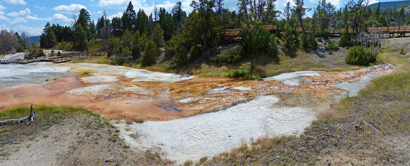 Yellowstone National Parc Mammoth Hot Spring Grassy Spring