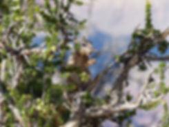 Grand Canyon National Park Rim Trail ecureuil
