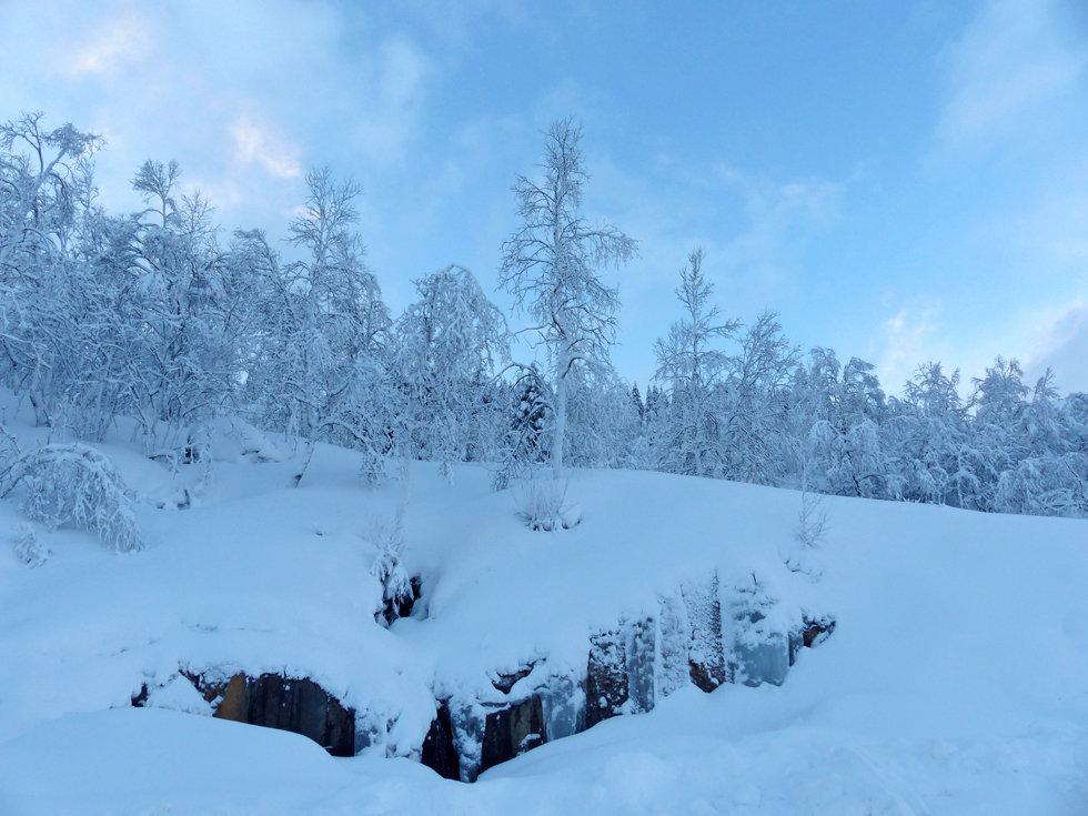 Norvège - hiver - neige - forêt