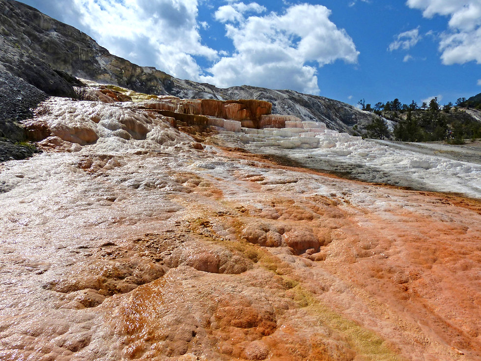 Yellowstone National Parc Mammoth Hot Spring Mound Terrace