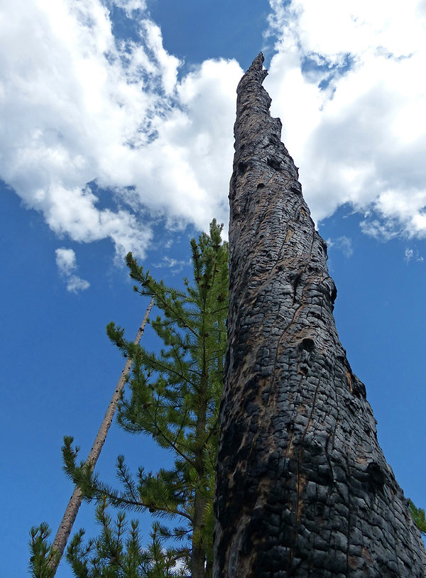 Yellowstone National Park Pin calciné