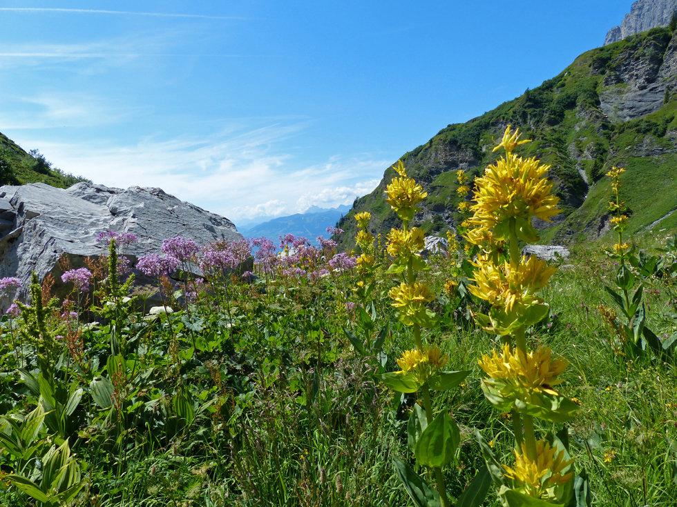 Lac de Pormenaz - reserve naturelle de Passy - fleurs