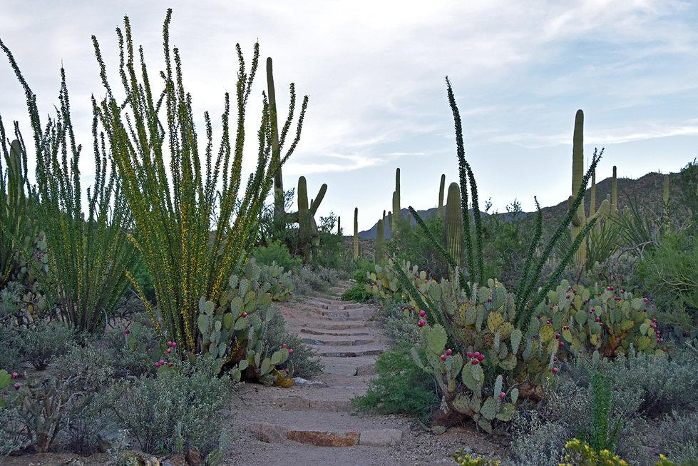 Arizona - Saguaro National Park - Valley View Overlook
