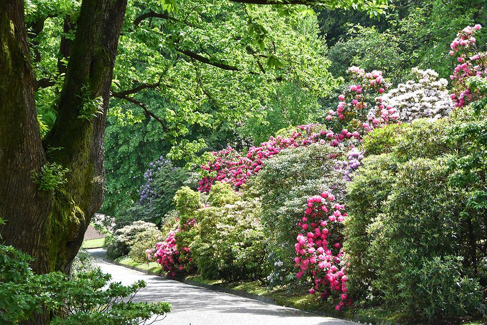 villa taranto verbania jardin rododhedron