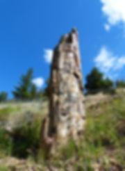Yellowstone National Parc petrified tree