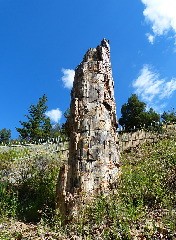 Yellowstone National Parc petrified tree