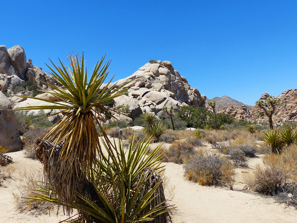 Joshua Tree National Park Hidden Valley Trail