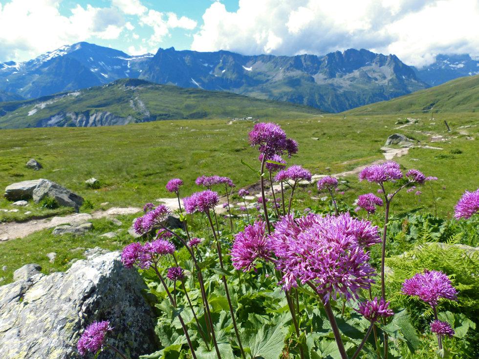 Chamonix - Refuge Albert 1er - fleurs