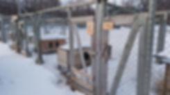Norvège - Team lyngen - chien de traineau