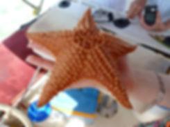 Grand cul de sac marin - étoile de mer