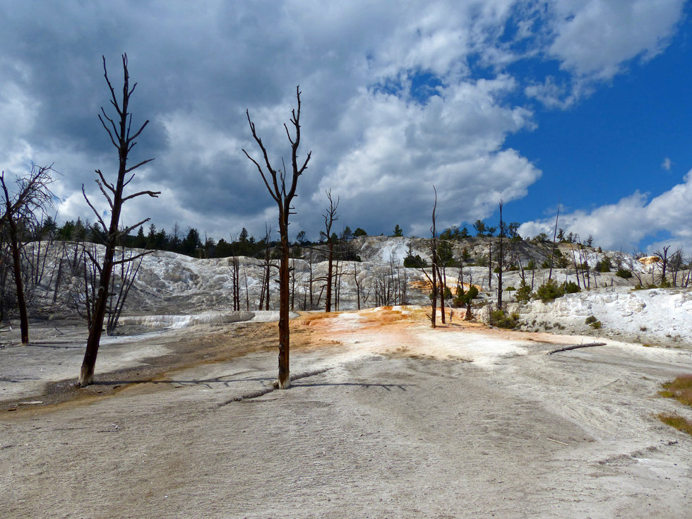 Yellowstone National Parc Mammoth Hot Spring Angel Terrace