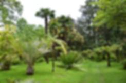 villa taranto verbania jardin palmiers
