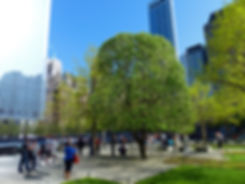 New-York - WTC memorial - Survivor Tree