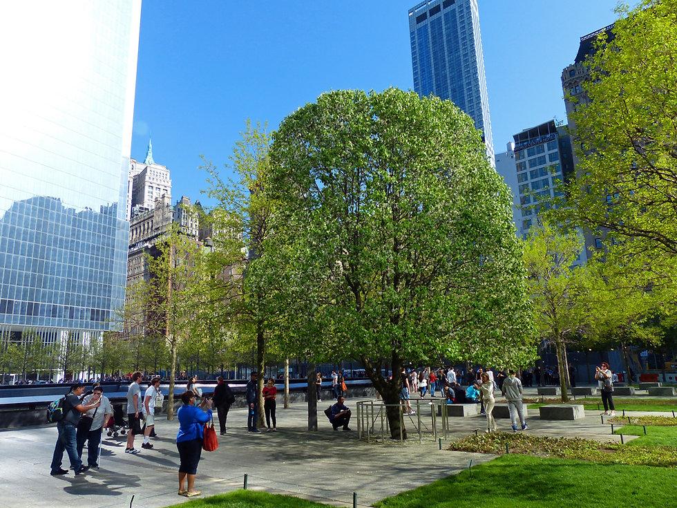 New-York - WTC memorial - Survivor Tree