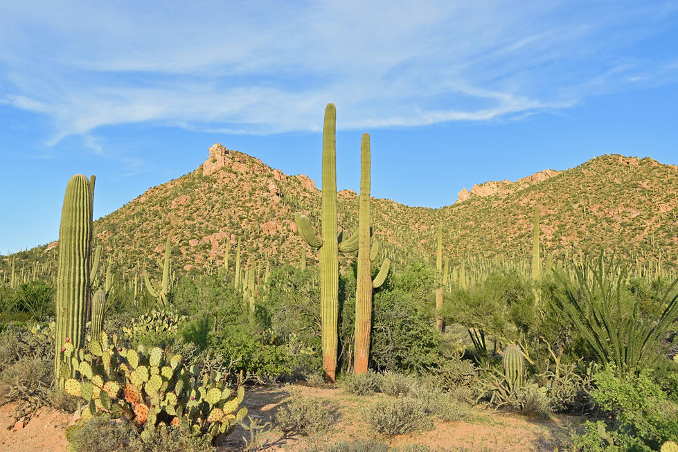 Arizona - Saguaro National Park - Bajada Loop Drive