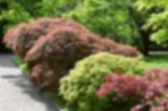 villa taranto verbania jardin erables japon