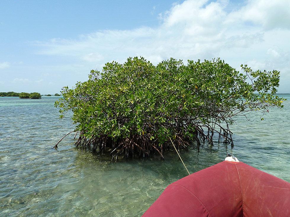 Grand cul de sac marin - lagon - palétuvier